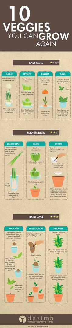 Want to know what vegetables you can grow again? Forget the seeds, you won't even need them with these options! Just stick them in the ground (or a cup) and watch them grow!