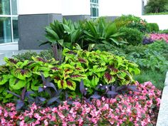 Summer annuals brighten a commercial location in downtown Atlanta.