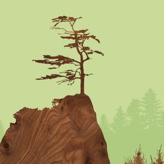 sitka spruce print | jefdesigns