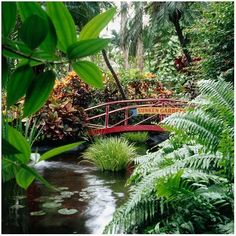 Sunken Gardens  St. Petersburg, FL