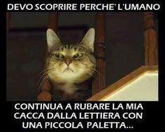 Cats funny sayings, funny pics of animals, hilarious animal memes, cute cat memes Memes Humor, Funny Animal Memes, Cute Funny Animals, Funny Cute, Funny Shit, Funny Memes, Cats Humor, Super Funny, Funniest Animals