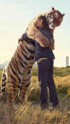 oh my. i didn't realize how big tigers were!