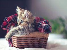 Gatito en una cesta