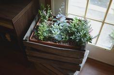 diy succulent planters Archives - Shelterness