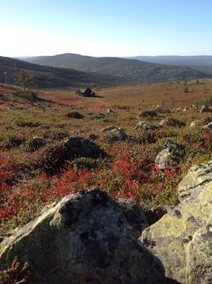 Levitunturi ruska aikaan. Levi Ski Resort in autumn time, such a colorfull view! Finland Lapland