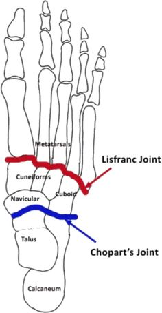 146930006567448137 further Muscle Tightness Front Thigh additionally 50775 Schmerzhafte Quadrizeps Sehne in addition Withfriendship   user levis intercostalmuscle moreover 5758015. on knee joint anatomy