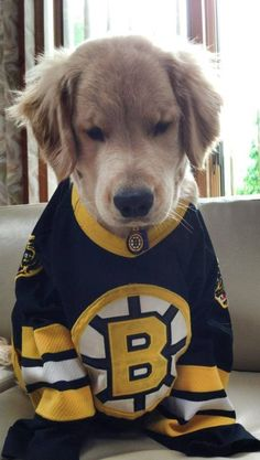 this is ray charles… a blind golden retriever and he just won over the internet and my heart. There is nothing better than a puppy and my favorite hockey team! Cute Puppies, Cute Dogs, Dogs And Puppies, Doggies, Baby Animals, Cute Animals, Boston Bruins Hockey, Ray Charles, Mans Best Friend