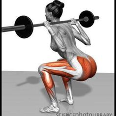 Back squats, when done properly, works every muscle in the posterior chain in addition to the quadriceps.