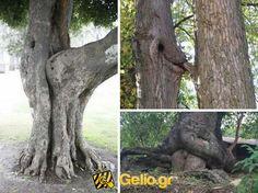 Όταν η φύση δημιουργεί...  Μπείτε στο http://www.gelio.gr και βρείτε περισσότερες αστείες εικόνες