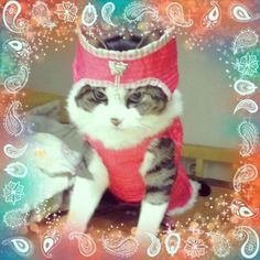 I made Korean style traditional cloth for my cat ,Kittynyong