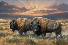 Dusty Plains-Bison Canvas by Rosemary Millette : Wild Wings Wildlife Paintings, Wildlife Art, Animal Paintings, Buffalo Painting, Buffalo Art, Buffalo Animal, American Bison, Native American Art, Animals Beautiful