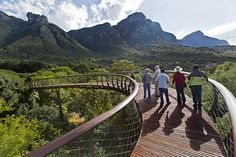 What Locals Love About Cape Town - Tree Canopy walkway at Kirstenbosch National Botanic Garden..