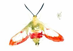 Buy Hummingbird Clearwing (Hemaris thysbe), Watercolour by Andrzej Rabiega on Artfinder. Discover thousands of other original paintings, prints, sculptures and photography from independent artists.