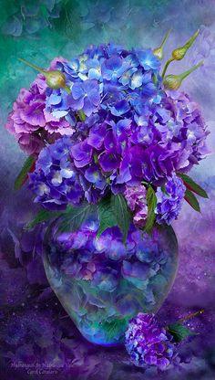 Hydrangeas • artist: Carol Cavalaris