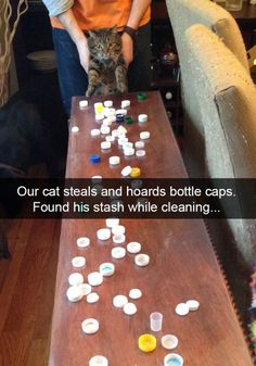 The 28 Funniest Cat Snapchats of All Time | Blaze Press