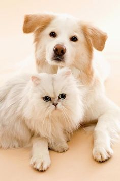 Get a Free Consultation for your #dog from our Friends at Nature's Select http://naturalpetfooddelivery.com/nsd/usa/free-consultation/ #cat #dog