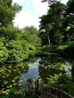 Tatton Park Cheshire Japanese Garden   Flickr - Photo Sharing!