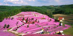 The Eastern Flora Hokkaido Tour   Hokkaido Travel - Luxury Holidays in Japan