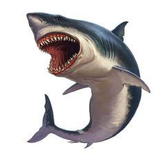 Shark Week Shark Shark Wall Decal Megalodon Shark Under The Sea Nursery Decor Ocean Animal Home Decor 12 *** Details can be found by clicking on the image. (This is an affiliate link) Shark Images, Shark Pictures, Hai Tattoo, All White Background, Model Tattoo, Shark Illustration, Arte Alien, Megalodon Shark, Shark Art