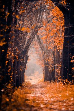 Love how the focal point is off in the distance here...it leads the eye through the tree tunnel, and makes everything feel so mysterious <3 |Photography ideas||Nature photography||Outdoors||Woods||Autumn colors|