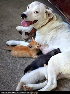 """Lovely LOL today! I wonder... Will these kittens say """"woof woof"""" instead of """"meow""""? Have a beautiful Wednesday guys! ;)"""