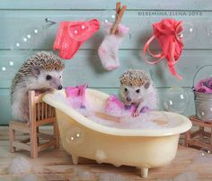 Tiny Hedgehogs Play Dress Up and Pose for Silly Photos – Sabine Rabold - Baby Animals Baby Animals Super Cute, Cute Little Animals, Cute Funny Animals, Funny Cute, Silly Photos, Cute Animal Photos, Animal Pictures, Cute Pictures, Funny Hedgehog
