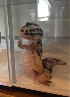If you're ever insecure about your tummy look how cute this lizard looks with its tummy. You look just as cute with yours.