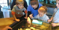 "Meet aquatic creatures up close at the Touch Tank in the ""Our Hudson Home"" exhibit."