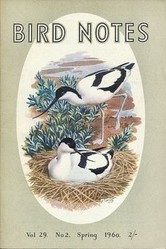 Charles Tunnicliffe RSPB Artwork Nature Artists, Bird Book, British Wildlife, Illustration Art, Book Illustrations, Wild Creatures, Royal College Of Art, Classical Art, London Art