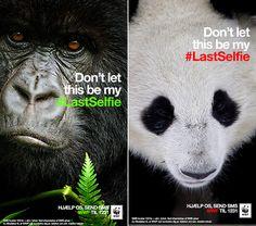 L'ultime selfie des animaux en voie de disparition : golem13
