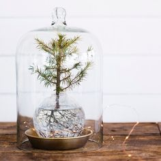 Irresistible What Is Hydroponic Gardening Ideas. Glorious What Is Hydroponic Gardening Ideas. Flower Decorations, Christmas Decorations, Hydroponic Farming, Holiday Crafts, Holiday Decor, The Bell Jar, Bell Jars, Perfect Plants, Mince Pies