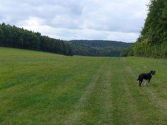 Urlaub mit Hund in Friedrichroda – Unterwegs im Thüringer Wald