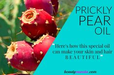 If you have a thing for exotic and unique oils, Prickly Pear Oil may just tickle your fancy! Before we learn about the beauty benefits of prickly pear oil, let's have a look at some important facts and info. Prickly Pear Oil Profile Scientific Name: Opuntia ficus-indica Other Names: Prickly Pear Oil is also known …