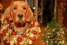 A Veterinarian's Holiday Wish | Pawcurious: With Pet Lifestyle Expert and Veterinarian Dr. V.