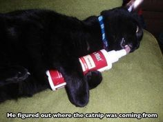 17 Cats That Might Have Had Too Much Catnip - World's largest collection of cat memes and other animals Funny Animal Memes, Cute Funny Animals, Cat Memes, Funny Cute, Cute Cats, Animal Humor, Funny Memes, That's Hilarious, Animal Antics
