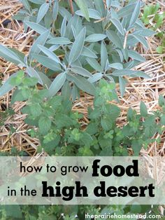 I love the practical tips in this desert gardening post. We don't technically live in the desert, but I'm going to apply these ideas to our own unique climate too.