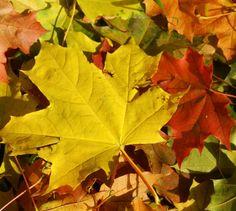 Efteråret er ovre os, og bladene viser sig fra sin smukkeste side. Du kan nemt bevare den smukke farve ved at følge vores hyggelige gør-det-selv projekt.