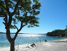 beachcomber: sydney harbour beach