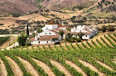 Borba and Pico (Madalena) . in Portugal are considered two of the 10 Amazing Wine Towns in Europe - September 7, 2013 by Anne Banas, SmarterTravel Staff  http://www.smartertravel.com/photo-galleries/editorial/10-amazing-wine-towns-in-europe.html?id=542