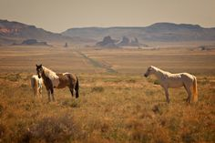 navajo-indian-horses / by Dan Sorensen Photography
