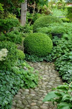 Natural forest planting along co blest one path with sheared ball boxwood topiary