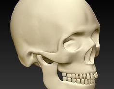 Human skull 3D print model bone 3d Printable Models, Human Skull, 3 D, 3d Printing, Statue, Prints, Impression 3d, Sculptures, Sculpture