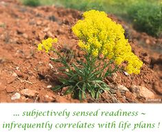 ... subjectively sensed #readiness ~ infrequently correlates with #life #plans !