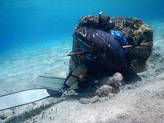 Grouper with a capital G #Grouper #Cozumel #isladecozumel #pescasub #freediving #apnea #spearfishing #Chanoc #Riffe #Beuchat