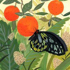 butterfly print by beccastadtlander on Etsy