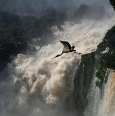 Die besten 100 Bilder in der Kategorie natur: Wasserfall mit Storch
