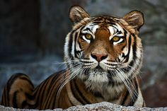 such a beautiful animal!