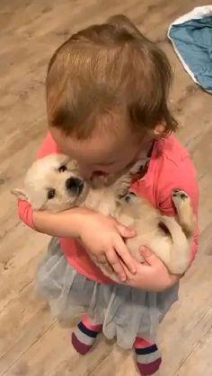 cute video golden retriever puppy