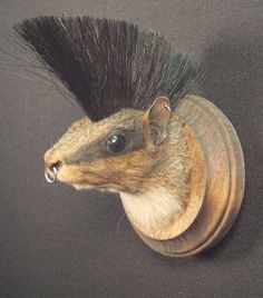 PUNK ROCK SQUIRREL real animal novelty mount rogue taxidermy sculpture. $250.00, via Etsy.
