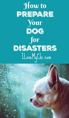 Be prepared ahead of time for emergencies and disasters and have a plan for what to do with your pet when one hits. It could be a matter of life or death. via @cathyratcliffe